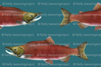 sockeye salmon on deep teal green