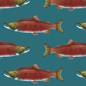 sockeye salmon on deep teal green