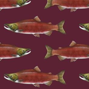 sockeye salmon on wine red