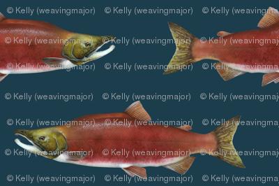 sockeye salmon on 1d3d4c navy