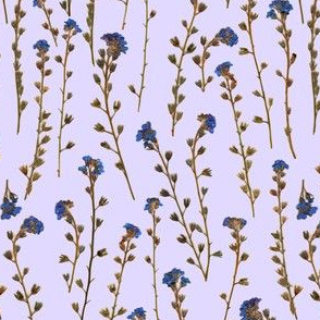 Dried Flowers 2