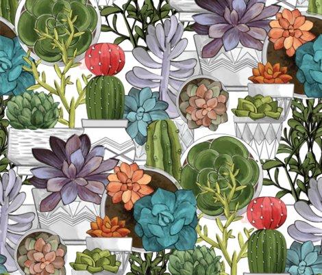 Rcolored-succulents_shop_preview