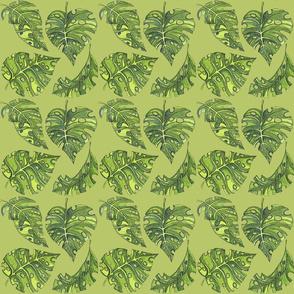 im a monstera green 6x6