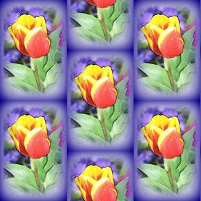 Tulip on purple