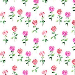 Rose garden, watercolor