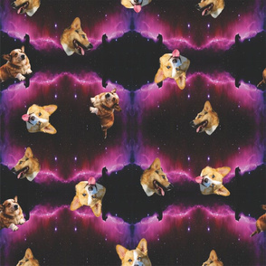 space corgi