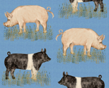 Hampshire_and_yorkshire_hogs_on_blue_rev_thumb