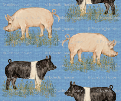 Rhampshire_and_yorkshire_hogs_on_blue_rev_preview