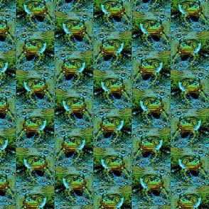 Peeping Frogs