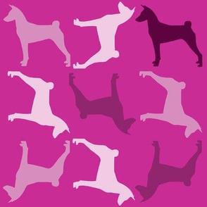 Basenji Pinks