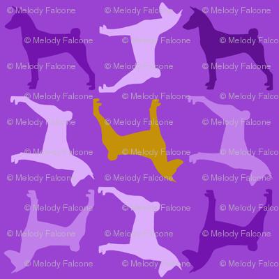 Basenji Violet