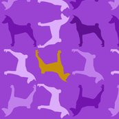 Basenji-violet_shop_thumb