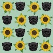 Raff-sunflower_shop_thumb