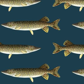 northern pike on navy blue