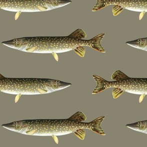 northern pike on pewter grey