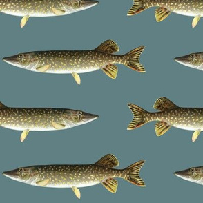 northern pike on slate blue