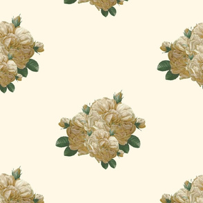 Redoute'  Yellow Rose of Texas ~ Dusty Trails on Cosmic Latte ~  custom size