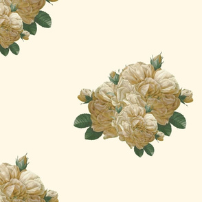 Redoute Yellow Rose of Texas ~ Dusty Trails on Cosmic Latte