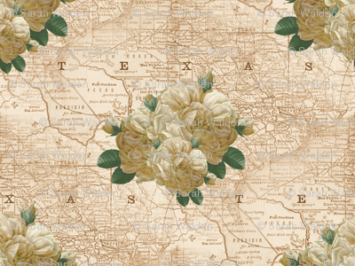 Redoute Yellow Rose of Texas ~ Dusty Trails