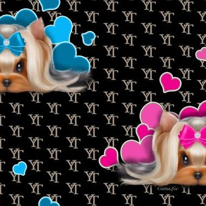 Yorkie Beauty YT B Blue Pink L