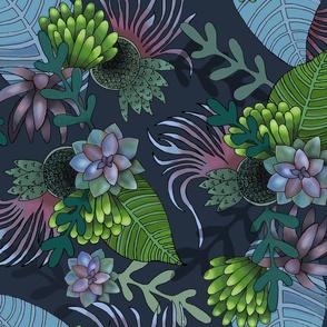 Perle Von Nurnberg - Danish Succulents