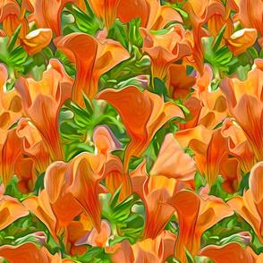 Orange Petunia Repeat
