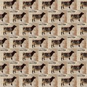 Rshorthorn-heifer-on-white_ed_shop_thumb