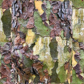 Camouflage tree bark by Salzanos