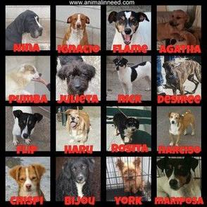 Spanish shelter dogs