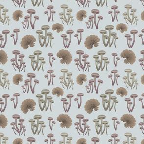 Oh My Fungi