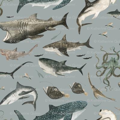sharks in denim blue!