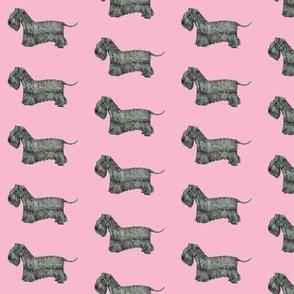 Cesky Terrier Pink