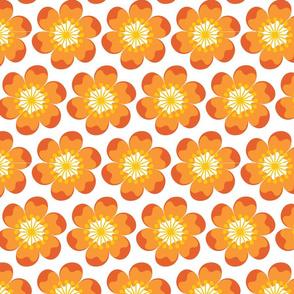 Big Fat orange flowers