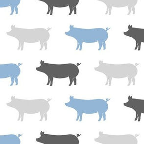 multi pigs - blue and grey