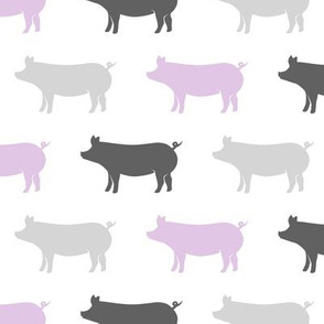 multi pigs - purple and grey