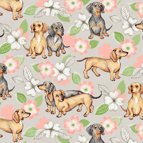 Dachshunds and dogwood blossoms - peach, large