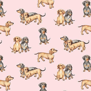 Lots of Little Dachshunds - pink