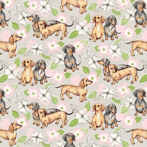 Dachshunds and dogwood blossoms - pink, small