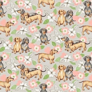 Dachshunds and dogwood blossoms - peach, small