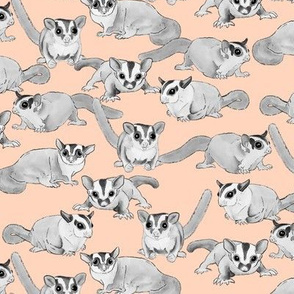 Sugar Gliders on Pale Pink