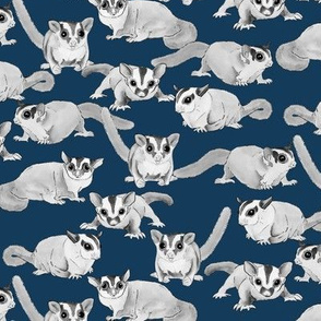 Sugar Gliders on Dark Blue