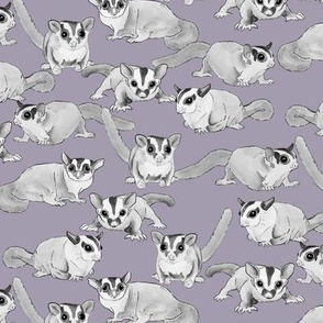 Sugar Gliders on Purple