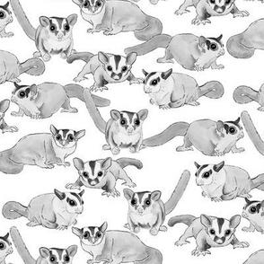Sugar Gliders in Black and White