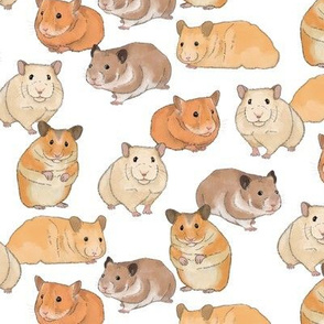 Hamsters in Color on White