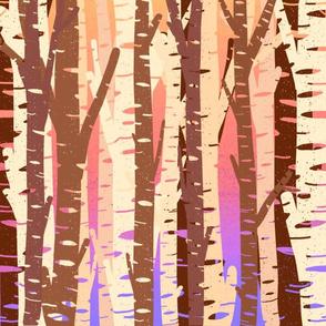 Birch Trees at Sunset