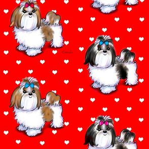 Shih Tzu love red  M