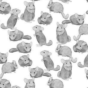 Chinchillas in Black and White