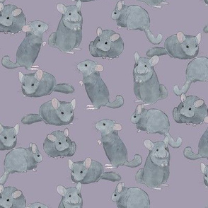 Chinchillas in Color on Purple