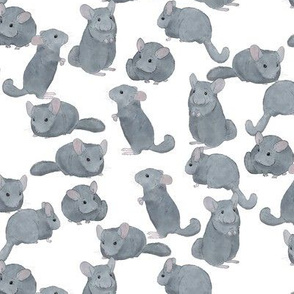 Chinchillas in Color on White