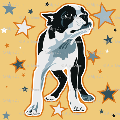 starry bostonterrier  wraping papaer